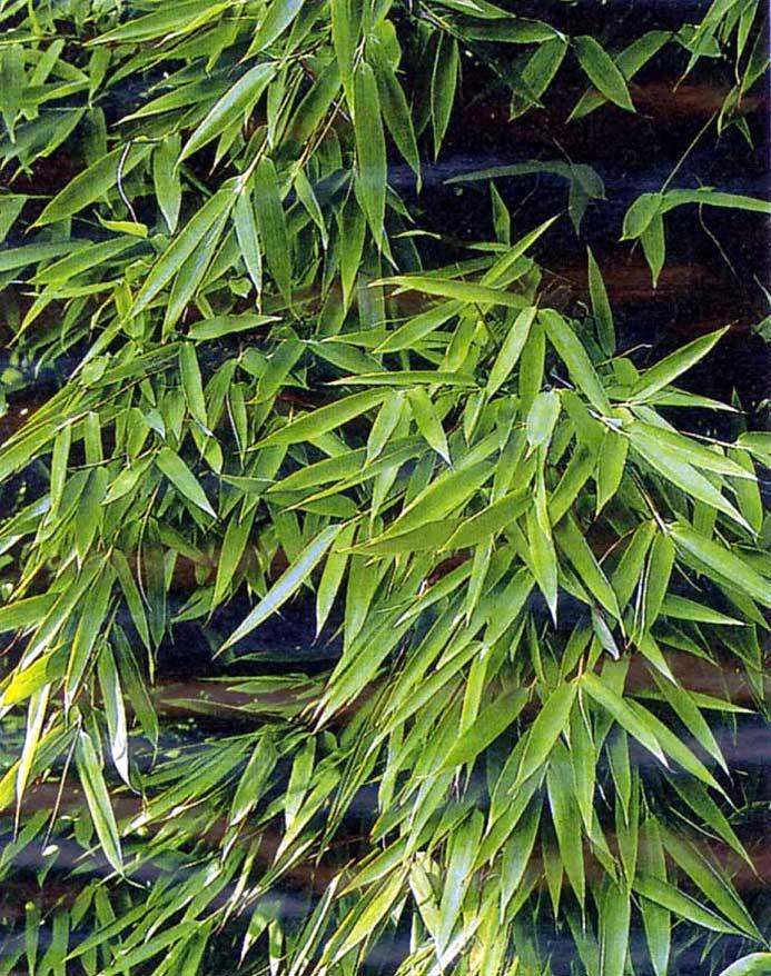 Bambus - Garten paravent bambus ...